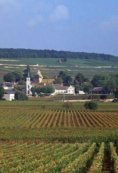 vineyards, Aloxe-Corton, Cote-DOr, Burgundy, France. Photo: Jon Arnold Images, Doug Pearson