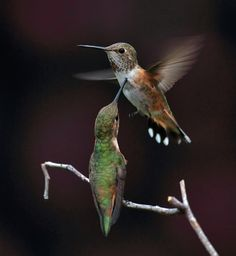 humming birds by Ray Morris, via 500px