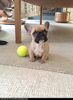 Play Fetch • APlaceToLoveDogs.com • dog dogs puppy puppies cute doggy doggies adorable funny fun silly photography
