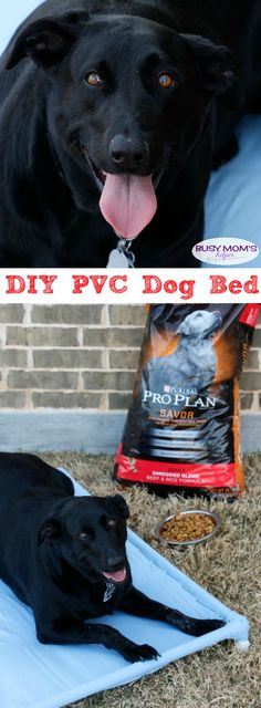Build a dog cot for around 10 pvc pipe dog beds and pipes diy pvc dog bed your pets will love this diy pvc dog hammock tutorial solutioingenieria Choice Image