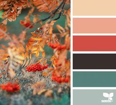 Color season wedding ideas color schemes, design seeds e cor Color Schemes Colour Palettes, Orange Color Palettes, Fall Color Palette, Colour Pallette, Color Combos, Colors Of Autumn, Design Seeds, Color Balance, Color Harmony