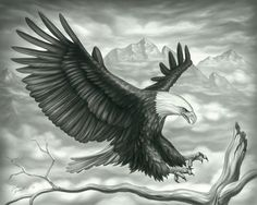 Pics For > Beautiful Sketches Of Eagles