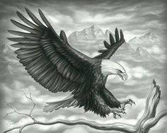 flying-eagle.jpg (600×478)