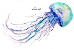 Watercolor clipart Jellyfish by Corner Croft on @creativemarket