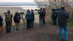 Kraanvogels en natuurfototentoonstellingen. Wij hebben plezier aan het Lac du Der. #willemlaros #photography #travelphotography #traveller #canon #fotocursus #fotoreis #travelblog #reizen #reisjournalist #panasonic #compositie #travelwriter #vubreda #fotoworkshop #reisfotografie #landschapsfotografie #cameranu #flickr #fbp #lacduder #kraanvogels #montierender