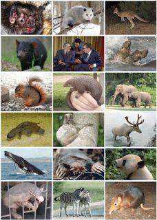 Lumea Animalelor: Mamifer