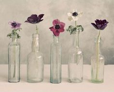 Floral Row Canvas Print
