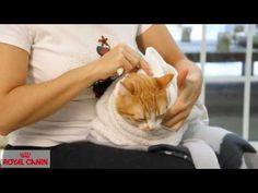 Cómo darle una pastilla a un gato - Consejos felinos Royal Canin