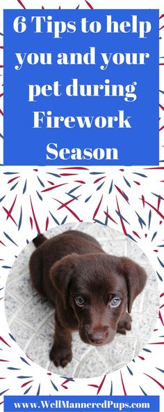 As we get ready for Labor Day to announce the end of summer, I wanted to share some tips to help you and your dog have a safe and fun time. You might be finalizing your plans or just in the early stages of figuring out what you want to do, either way there is still a chance to make sure your dog is included and you both have a good time as well.  #fireworks #dogsafetytips #dogowners #partyplanning #dogwalkingtips #holiday #dogs