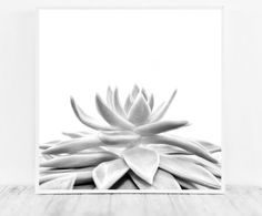 Succulent Print Succulent Printable Succulent Poster Succulent Wall Art Succulent Photo Black and White Digital Photography Instant Download