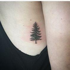 Pine tree עץ אשוח