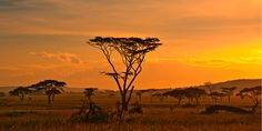 African sunset in the Serengeti National Park, Tanzania - Buy this stock photo and explore similar images at Adobe Stock Chutes Victoria, African Sunset, Africa Destinations, Serengeti National Park, Les Continents, Fantasy Landscape, Landscape Photos, African Safari, Quote Of The Day
