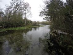 Explore the natural beauty of Florida at Wekiva Springs. #LoveFL #WekivaSpring #Florida