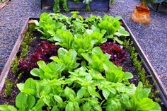 Do your gardening daydreams involve a greenhouse, but maybe your budget isn't ready? Look no further than your kitchen recyclables, and try A Garden for the House's trick of winter-sowing, making mini-greenhouses out of discarded milk cartons.