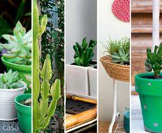 01-suculentas-plantas-faceis-de-cuidar Feng Shui, Planter Pots, Garden, Up, Design, Medicinal Plants, Herbs, Cactus Plants, Gardening