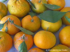 Tangerines ~ Mandarin tangerine ~ now in Farmers' Markets. The skin is not fully orange yet because our night have not been cold enough yet--but they still taste great! Photo © 2013 Ann M. Del Tredici