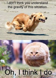 Enjoy funny animal memes that include cat memes, your favorite dog memes, funny squirrel memes, cute bear memes and a lot more that will make you laugh! Funny Animal Jokes, Best Funny Jokes, Funny Animal Photos, Funny Dog Memes, Cute Funny Animals, Cute Baby Animals, Cat Memes, Funny Cute, Funny Dogs