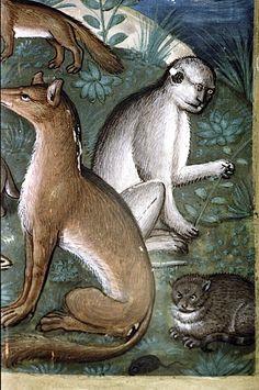 Gatto, volpe e scimmia. Dettaglio da Creazione degli animali, Libro d'ore, Francia, seconda metà XVI sec.