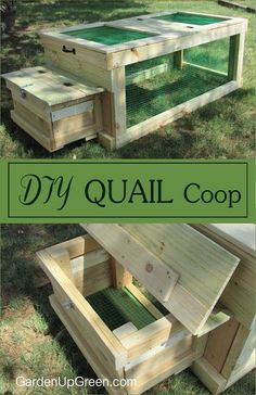 Finding the right quail coop sometimes depends on the available space and breed of quail you want. This coop is great for those interested in raising quail on a small scale in their backyard or homest