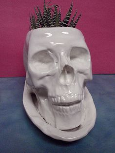 Hi,  I am Bonehead a large skull planter. I am 7 inches tall and my head circumference is 18 inches. I have drain holes for good plant health and