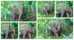 Животний мир острова Борнео в Малайзии это тема заслуживающая отдельного внимания. Неизведанный мир джунглей, гор и каньонов! Здесь обитают тысячи видов редких животных! Джунгли  острова Борнео считаются одними из самых диких и нетронутых мест на Земле!  http://интурист.org/blogi-turistov/zhivotnyj-mir-ostrova-borneo