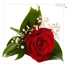Google Image Result for http://www.jadelouiseflorist.co.uk/resources/weddings-red-and-white-roses-buttonhole-red-lg.jpg