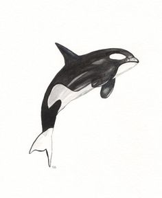 Items similar to Orca Whale / black / white/ Archival Watercolor Print on Etsy Orca Tattoo, Whale Tattoos, Whale Drawing, Ship Drawing, Killer Whale Tattoo, Killer Whales, Orca Art, Whale Crafts, Whale Illustration