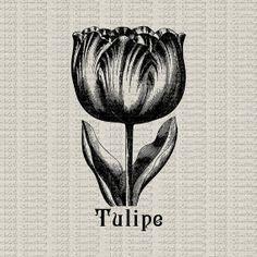 Tulip Vintage Botanical Illustration Flower Spring Instant Download Digital Image Fabric Transfer Burlap Pillow Totes Tea Towel Paper Crafts...