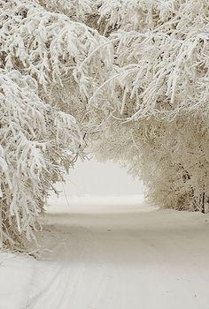 J'adore quand les arbres sont pleins de neiges et qu'ils se touchent ainsi :)