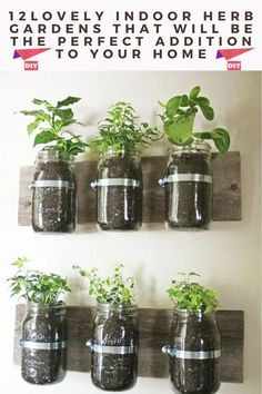 Mason Jar Herbs, Mason Jar Herb Garden, Mason Jars, Container Herb Garden, Herb Garden In Kitchen, Kitchen Herbs, Glass Jars, Kitchen Ideas, Container Plants