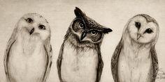 owls - :-)