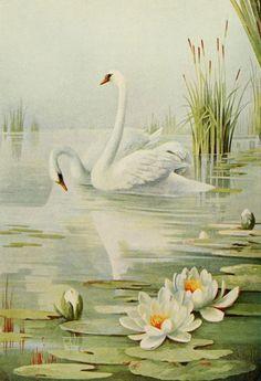 Birds & All Nature 1900 - 2-7, Edmund Osthaus (1858-1928). #vintage, #animals, #bird