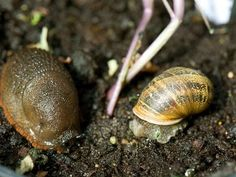 Keep common pests out of your garden with these prevention tips and tricks.