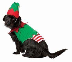 Rasta 5028-M Medium Elf Dog Costume http://www.shop.com/Rasta+5028+M+Medium+Elf+Dog+Costume+Pet+Costumes-919197081-p+.xhtml?credituser=C9080485