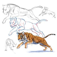 Tiger sketch process by oxpecker on DeviantArt Anatomy Sketches, Anatomy Drawing, Cat Drawing, Big Cats Art, Cat Art, Animal Sketches, Animal Drawings, Arte Elemental, Tiger Sketch