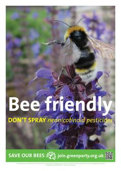 Garden Bee Friendly and Don't Use Neonicotinoid Pesticides! Bee Friendly Plants, Eco Friendly, Million Flowers, Dandelion Wine, Wild Bees, Bee House, Bee Do, Save The Bees, Love Pet