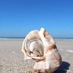 Waking up an hermit crab (not my own gif). Beautiful Sea Creatures, Animals Beautiful, Beautiful Smile, Funny Animal Videos, Cute Funny Animals, Animals And Pets, Baby Animals, Animals Sea, Ocean Creatures