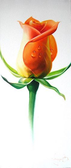 Flowers painting orange 22 Best Ideas - All About Watercolor Cards, Watercolor Flowers, Watercolor Paintings, Painting Flowers, Beautiful Roses, Beautiful Flowers, Polychromos, Color Pencil Art, Botanical Art