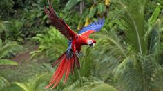 Berke Stevenson - red and green macaw wallpaper hd backgrounds images - 1920x1080 px