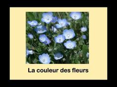 You Tube channel with French language learning videos HillMadame French Teaching Resources, Teaching French, French Basics, French Poems, French Colors, Core French, Teaching Colors, French Immersion, French Teacher