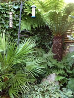 Courtyard garden in Brighton, Sussex, with evergreen tropical planting including palms, bamboo, tree ferns and groundcover