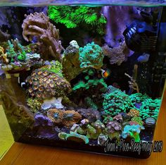 Saltwater Tank, Saltwater Aquarium, Aquarium Fish Tank, Planted Aquarium, Reef Aquascaping, Nano Reef Tank, Marine Fish Tanks, Coral Reef Aquarium, Cool Fish Tanks