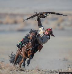 Exciting 2 Days at The Golden Eagle Festival 2018 in Mongolia Aigle Animal, Eagle Hunting, Foto Sport, Instagram King, Golden Eagle, People Of The World, Animal Photography, Scenic Photography, Night Photography