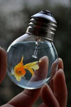 cool idea for a fish bowl(temporarily) ...probably would need something bigger though