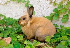 Nutmeg, looking for his sister, Miss Clover Go Pats, Rabbits, Bunny, Bicycle, Adventure, Illustration, Cute, Animals, Cute Bunny