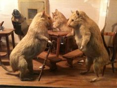 Squirrels who smoke cigars, squabble and get up to mischief are among the many, some might say macabre, delights of Walter Potter's world