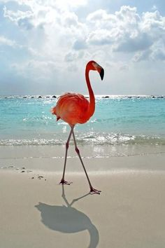 .Flamingos are so weird yet so beautiful.