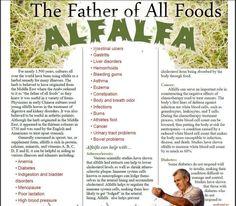 I swear by Shaklee's Alfalfa!!