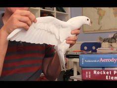 How bird wings work / Come funzionano le ali degli uccelli
