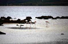 Flamingo Flamingo, Camel, Mosaic, Animals, Beauty, Flamingo Bird, Animales, Animaux, Mosaics